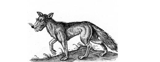 I cavalli portalupo: dalle ricerche storiche del guardiaparco Bruno Usseglio