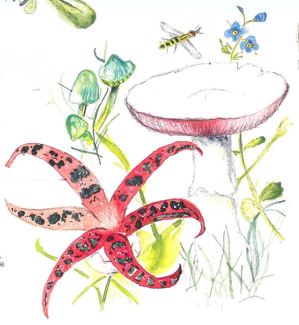 I funghi dei prati di pianura