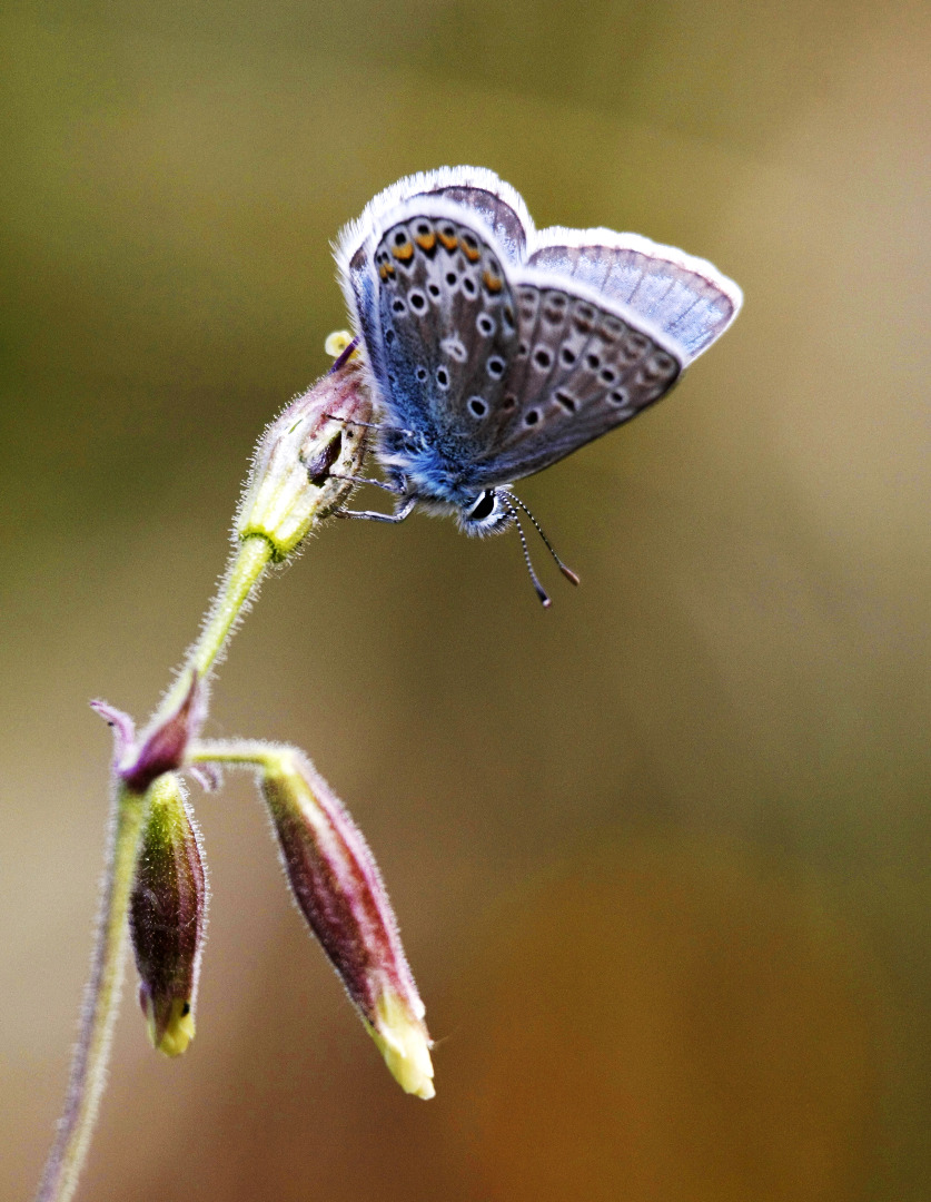 Biodiversità. Una definizione del 1988 sempre attuale