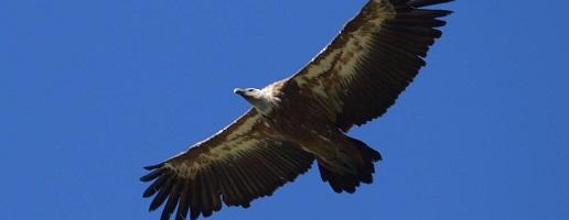 """Disponibile il secondo numero di """"Avvoltoi Piemonte"""""""