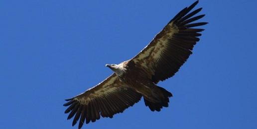 """Online il primo numero di """"Avvoltoi Piemonte"""""""