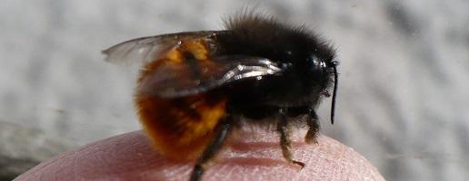 Biodiversità & Bricolage. Come costruire nidi per le api selvatiche