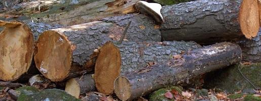 Intervento forestale nel Parco naturale del Gran Bosco, chiusura temporanea del sentiero n.10