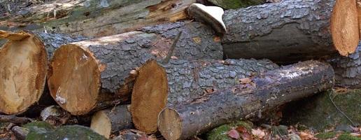 Intervento forestale nel Parco naturale del Gran Bosco