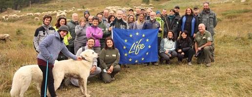 Nelle Alpi Cozie visita sul campo a realtà virtuose nella prevenzione degli attacchi da lupo al bestiame grazie ai cani da guardiania