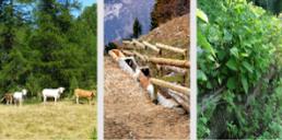 """Pitem Biodiv'alp: seminario """"La gestione dei fattori di erosione della biodiversità"""""""