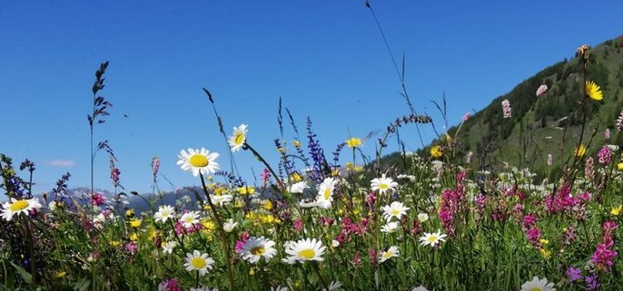 17-22 maggio: una settimana per la #biodiversità