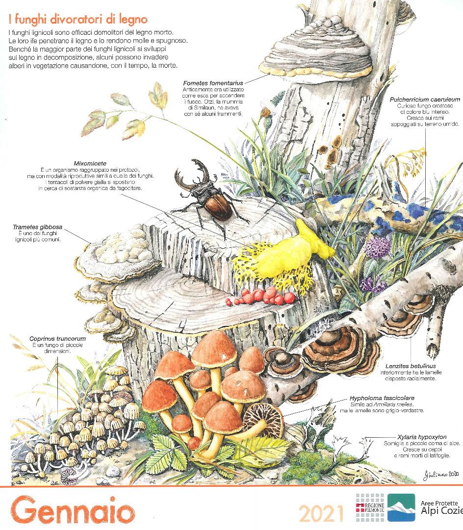 I funghi divoratori di legno