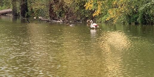 Avvistamenti inconsueti sul lago Piccolo di Avigliana