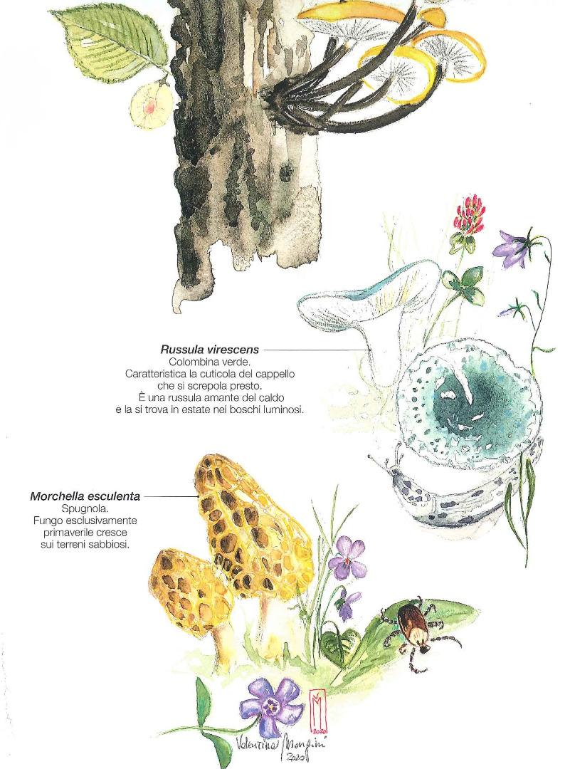 Olmo e funghi. Calendario 2021 Parchi Alpi Cozie
