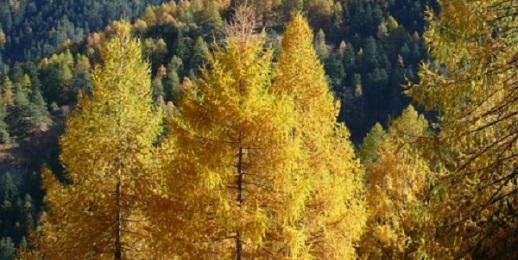 Sportelli Forestali Parchi Alpi Cozie