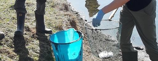 Moria di anfibi al Lago delle rane di Usseaux