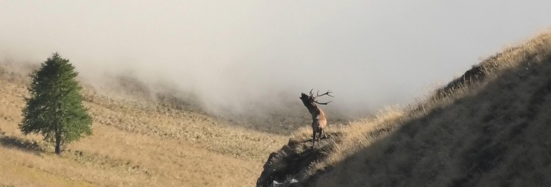Playlist YouTube Piccoli Frammenti di Natura e Cultura