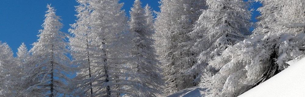 Sempre nuovi video sul canale Youtube dei Parchi Alpi Cozie!