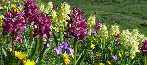 21 maggio: Giornata Europea Rete Natura 2000