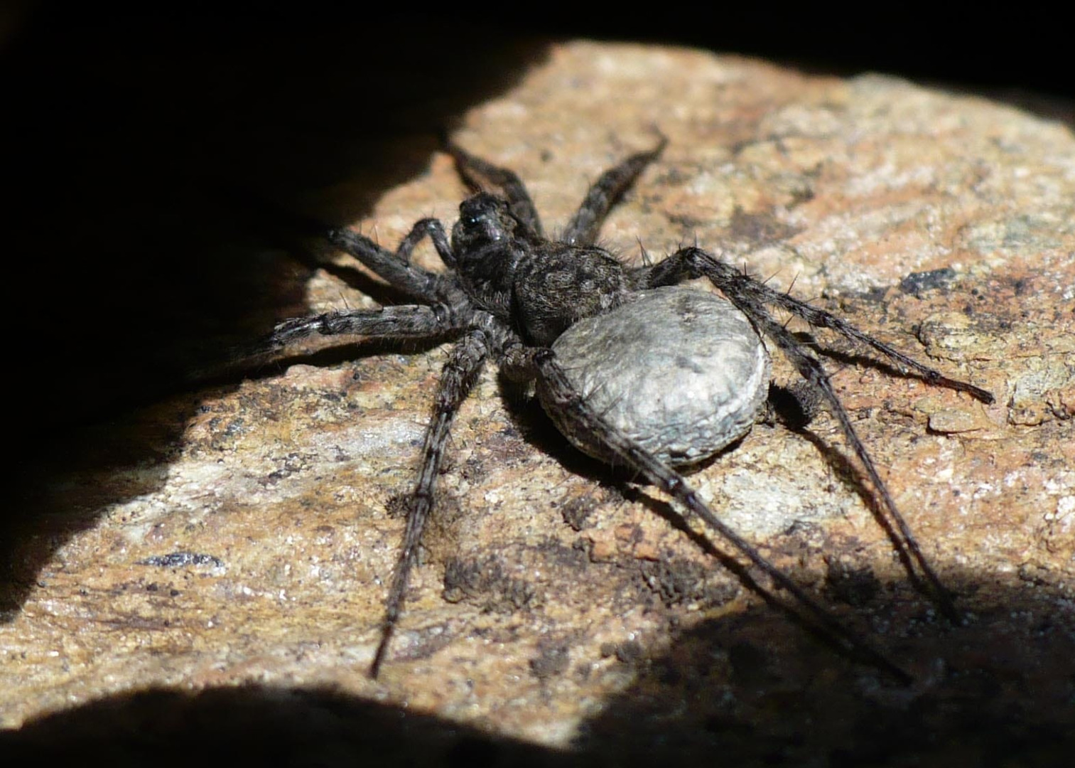 Come nascono i ragni?