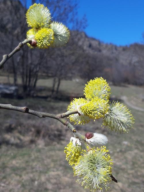 Le piante che fanno primavera!