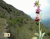 """Sabato 26 maggio Mompantero """"Le orchidee delle oasi xerotermiche della Valle di Susa"""""""