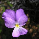 """Sabato 28 luglio - Pragelato """"Di fiore in piatto, giornata pratica di raccolta e cucina erbe selvatiche"""""""