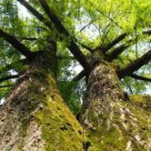 Mostra fotografica grandi alberi fuori dal bosco