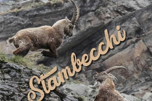 Calendario 2019: Stambecchi