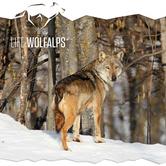 Mostra Tempo di lupi al Forte di exilles